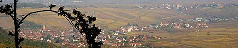 Riquewihr en Alsace et ses vignobles